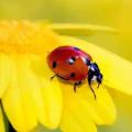 前沿数码资讯:谷歌在其AR搜索结果中添加了23种昆虫
