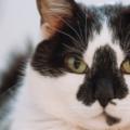 索尼相机现在可以聚焦宠物的眼睛