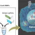 癌症治疗的新途径:开发同步多基因编辑技术